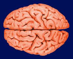 your-brain